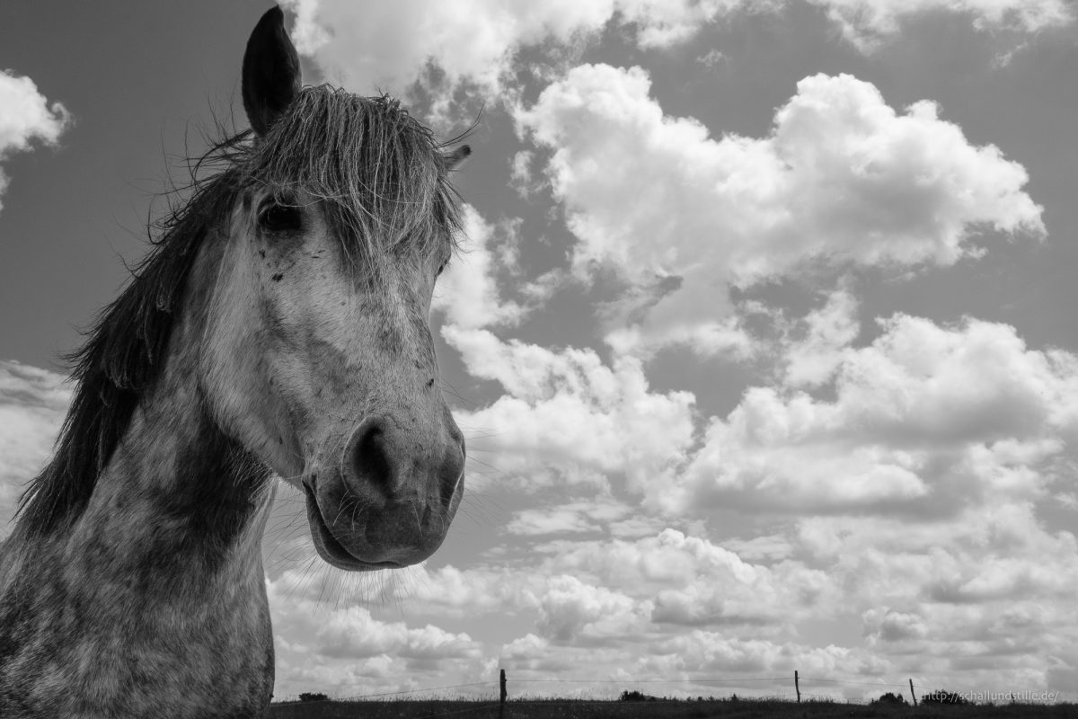 Pferdesachen und Nicht-Pferdesachen